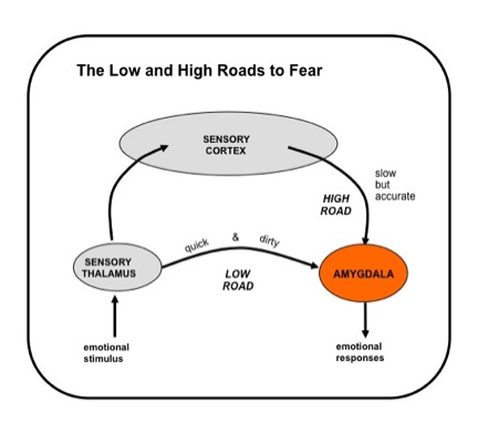 The low and high sensory roads to the amygdala.  Sensory information reaches the amygdala from the sensory thalamus (low road) and sensory cortex (high road). Both are probably non-conscious inputs the amygdala.  However, the information in the high road is potentially the same or similar to information that is projected to cortical areas that allow for conscious perceptual experience (e.g. frontal and parietal areas).  The low road is a quick and dirty route, as it provides only crude stimulus information