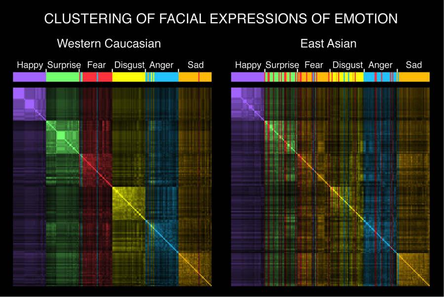 Figure 3: Clustering of Western Caucasian and East Asian facial expressions of emotion. In each panel, color-coded vertical bars show the cluster membership of each facial expression of emotion in each culture, where brighter colors indicate higher similarity between facial expressions AU patterns, darker colors indicate lower similarity. For example, in the Western Caucasian panel, the large brightly colored squares across the diagonal show that, within each emotion category, facial expression AU patterns are highly similar. Correspondingly, Western Caucasian facial expressions form six emotionally homogenous clusters (e.g., all 'happy' AU patterns comprise the same cluster, color-coded in purple). In contrast, East Asian facial expression AU patterns show similarity between emotion categories, particularly 'surprise,' 'fear,' 'disgust,' 'anger,' and 'sad' (note the heterogeneous color coding). Figure from Jack et al., 2012.