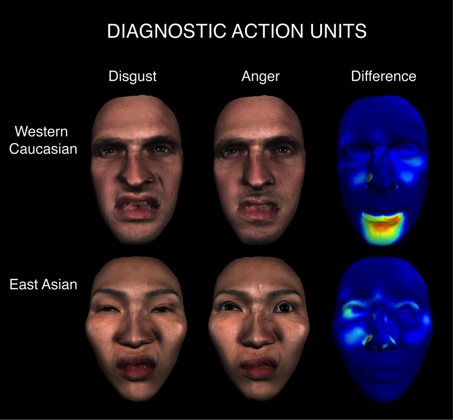Figure 4: Cultural differences in diagnostic Action Units. Western Caucasian facial expressions of 'disgust' and 'anger' differ in the mouth region, as shown by the color-coded difference map. East Asian facial expressions of 'disgust' and 'anger' differ in the eye region. Note the narrowing of the eyes in 'disgust' compared to the eye whites in 'anger,' as reflected in the corresponding difference map. Figure from (Jack and Schyns 2015).